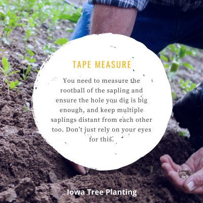 What Tree Planting Tools Exist?