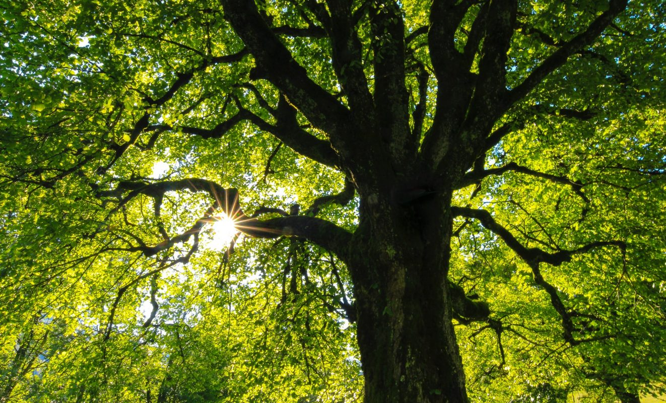 trees give off carbon dioxide