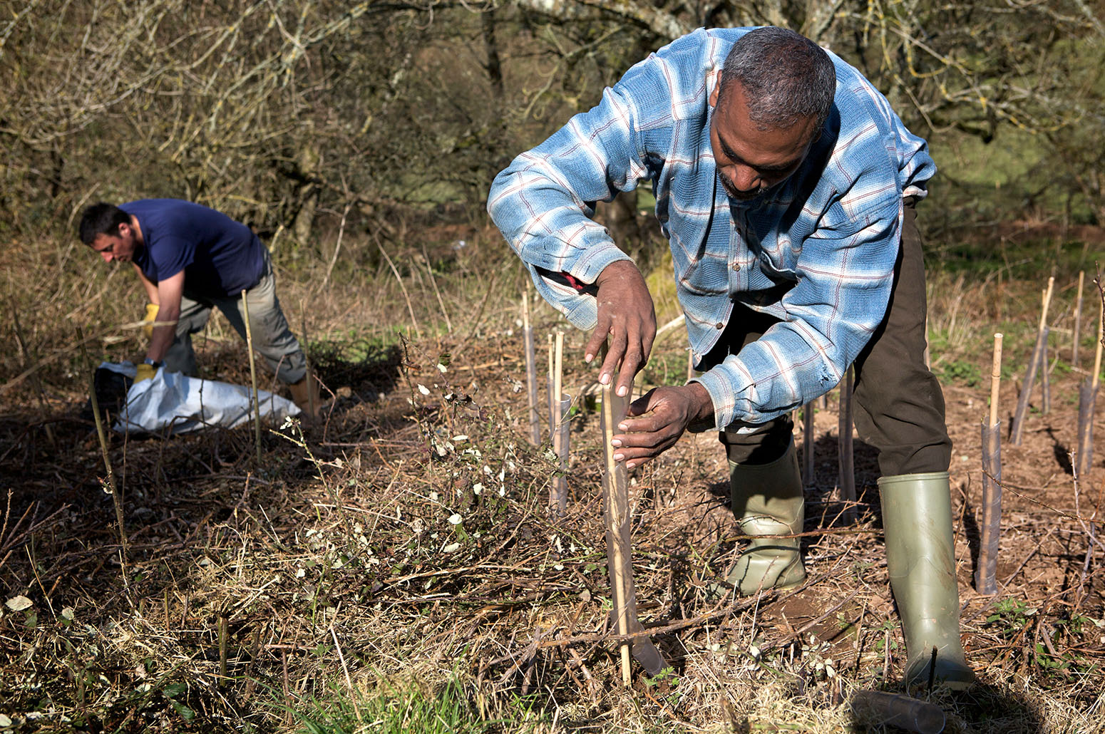 Tree Planting: A Solution to Climate Change
